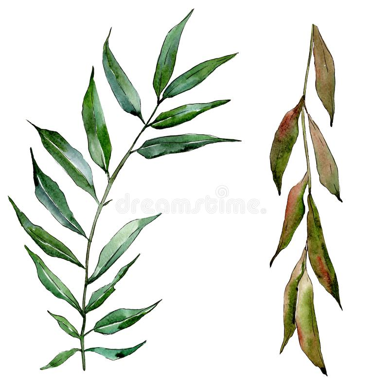 Green willow branches. Watercolor background illustration set. Isolated branch illustration element. vector illustration