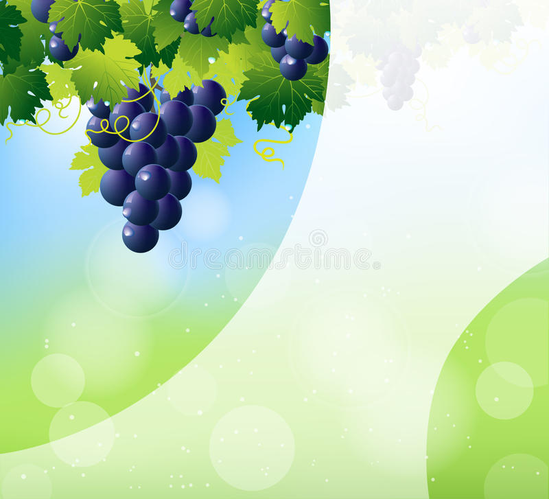 Green wine and bunch of blue grapes vector illustration