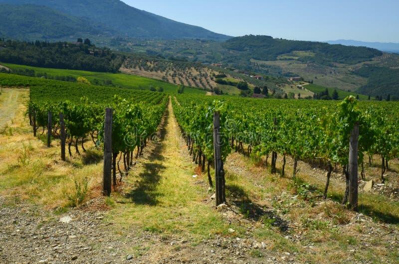 Green Wineyards in Tuscany, Chianti, Italy royalty free stock photos