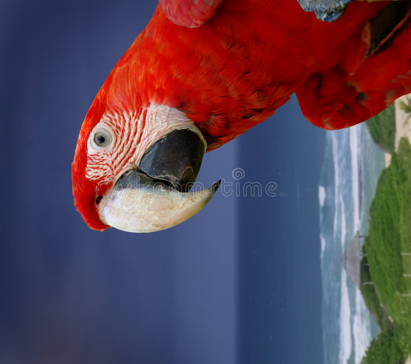 Download Green wing macaw parrot stock image. Image of landscape - 3910533