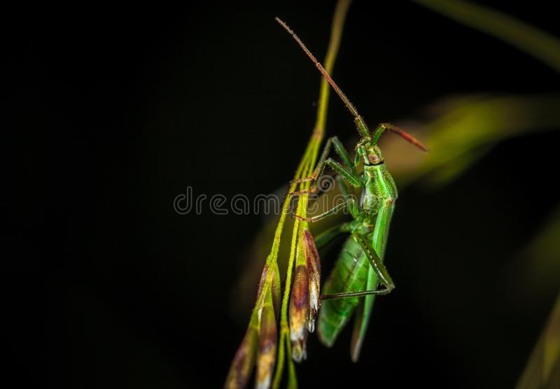Green Winged Insect Perching on Green Leaf in Close-up Photography royalty free stock photography
