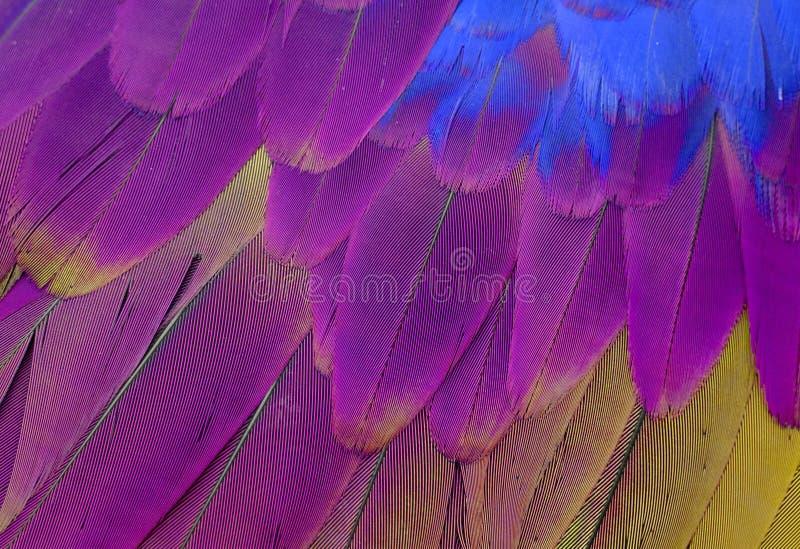 Green-winged Macaw (Ara chloropterus). Beautiful Green-winged Macaw (Ara chloropterus) back feather stock photography