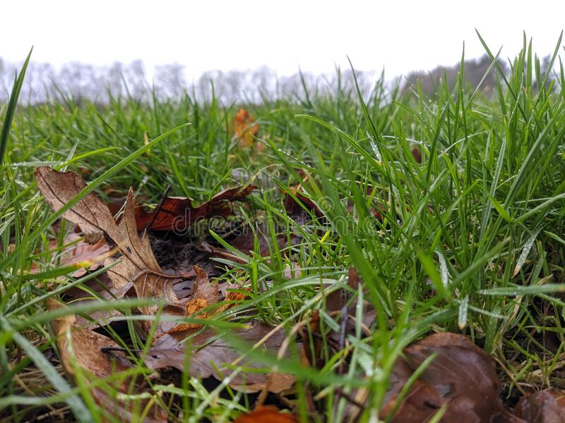 A green winter grass on a football field royalty free stock photo