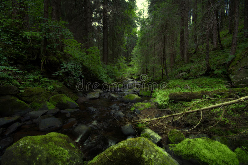 Download Green wood stock image. Image of canopies, mountain, fanis - 27057081