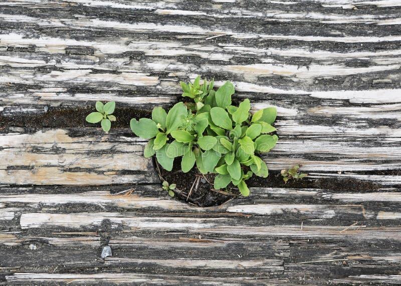 Green wood royalty free stock photo