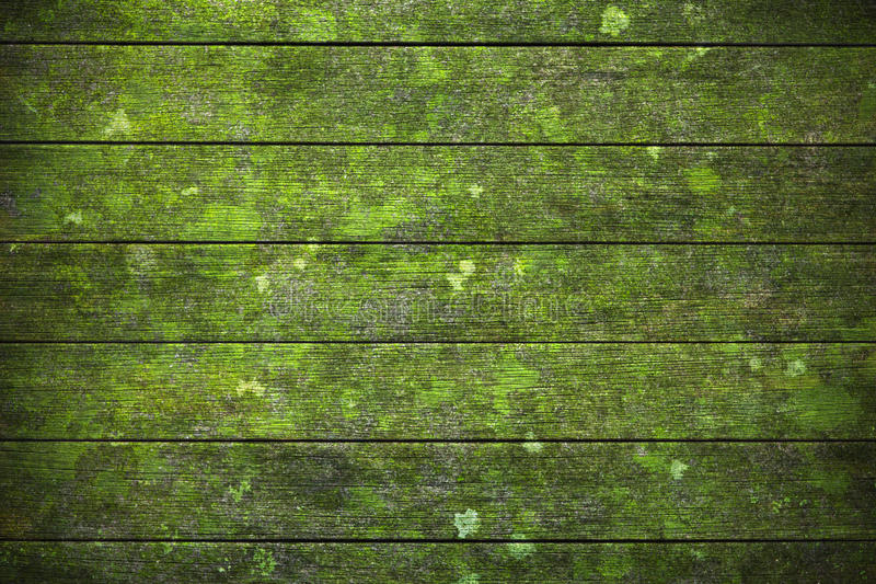 Green Wood Moss Lichen Background. A very old, damp wood surface going green with moss and lichen stock photography