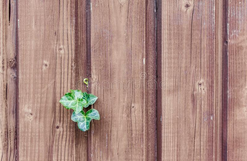 Green, Wood, Leaf, Wood Stain royalty free stock photo