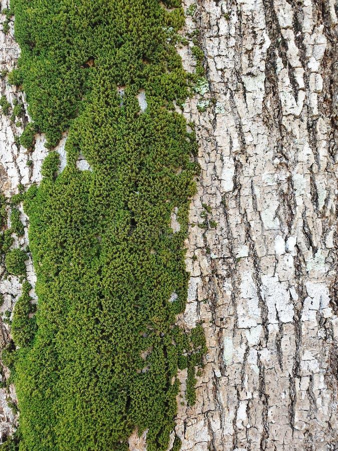 Green Wood Moss. Patern stock photos