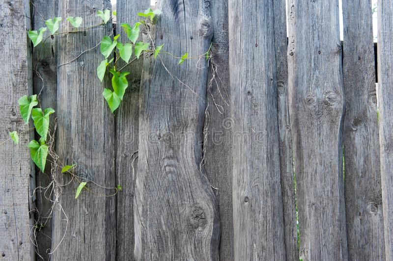 Green, Wood, Tree, Leaf stock photography