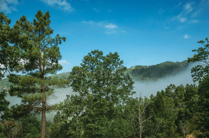 Wooded valley with mist coming up stock photography