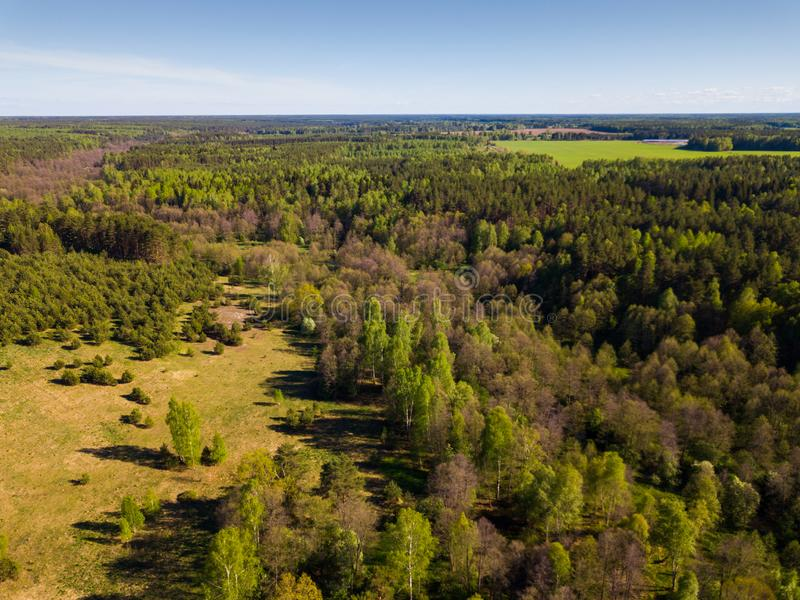 Green woodland, central Russia. Scenic summer landscape with green mixed woodland in central Russia stock photos