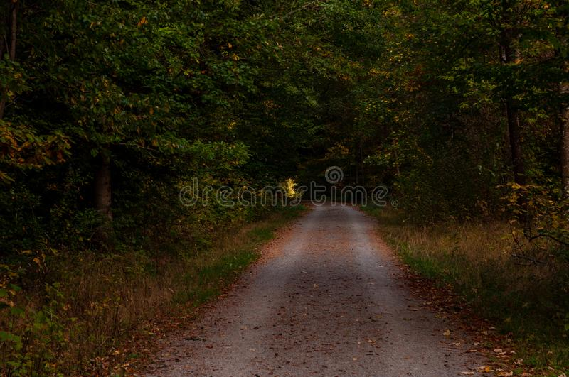 Green woodland trees with dirt road stock photos