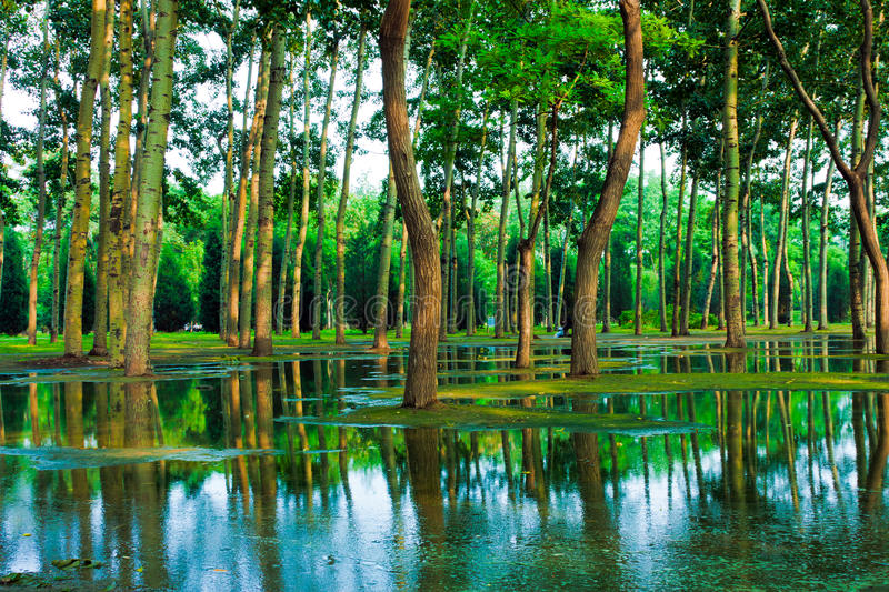Download Green woods stock photo. Image of outdoors, pond, branch - 21640838
