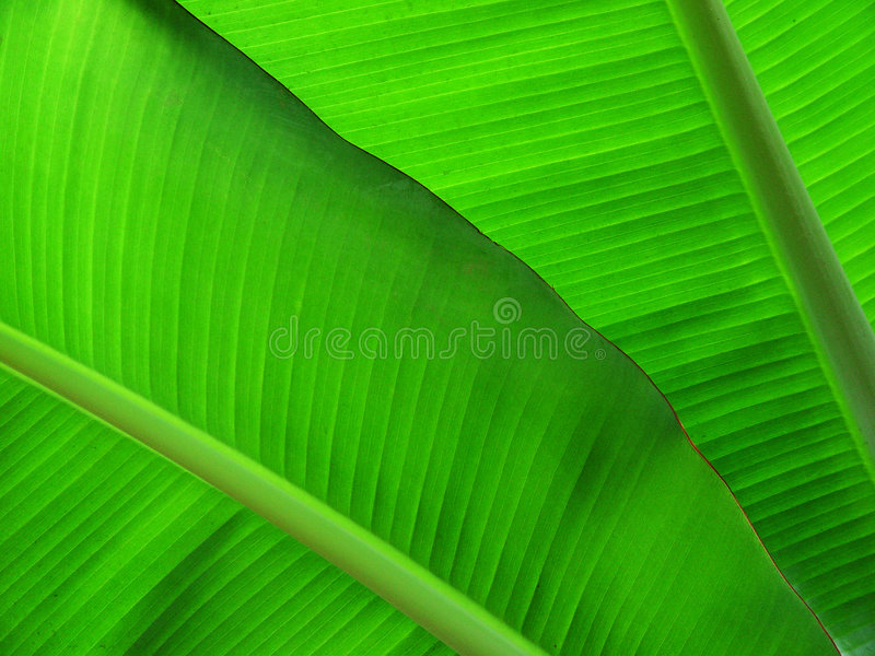 Download Green world stock photo. Image of vegetable, border, botanist - 3146958