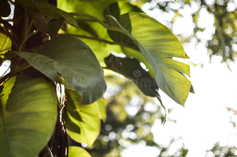 Green world. Take it slow in the green world stock photography
