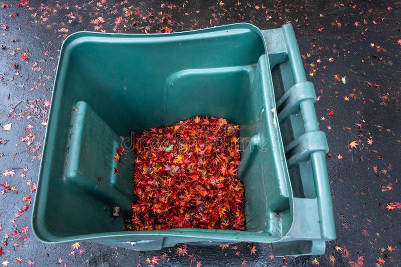 Green yard waste container filled with wet maple leaves, wet asphalt driveway, fall cleanup royalty free stock photo