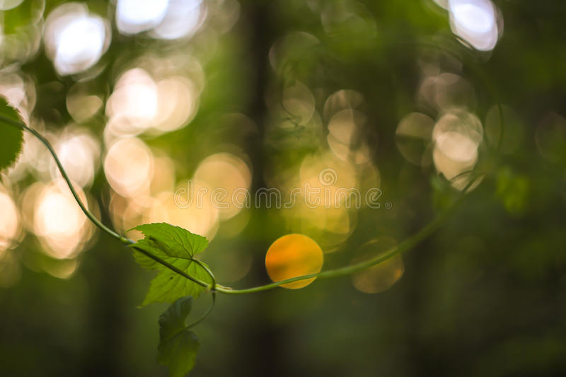 Green and yellow abstract blurred background with plant and beautiful bokeh in sunlight. Macro image with small dept of field. Background of green and yellow royalty free stock photography