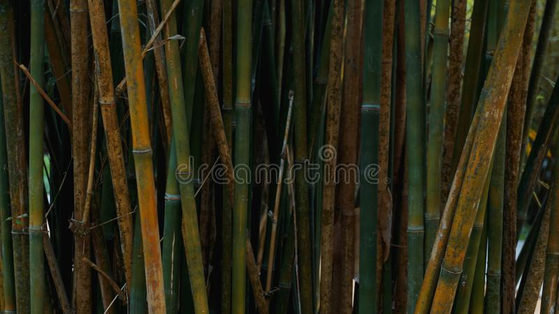 Bamboo fence texture background, bamboo texture panorama stock images