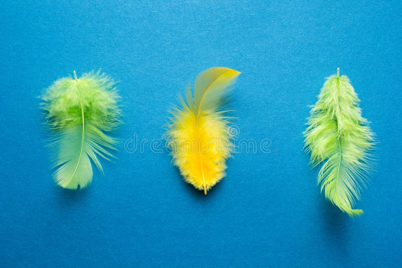 Green and yellow bird feather on a blue background.  stock image