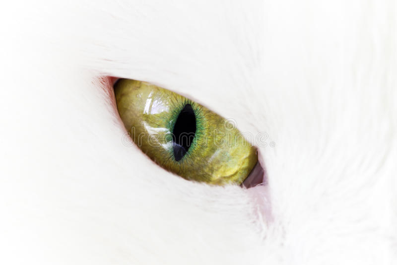 Download Green yellow cat eye stock photo. Image of kitten, predator - 24758726