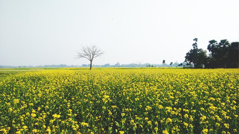 Green And Yellow Flower Field Free Public Domain Cc0 Image