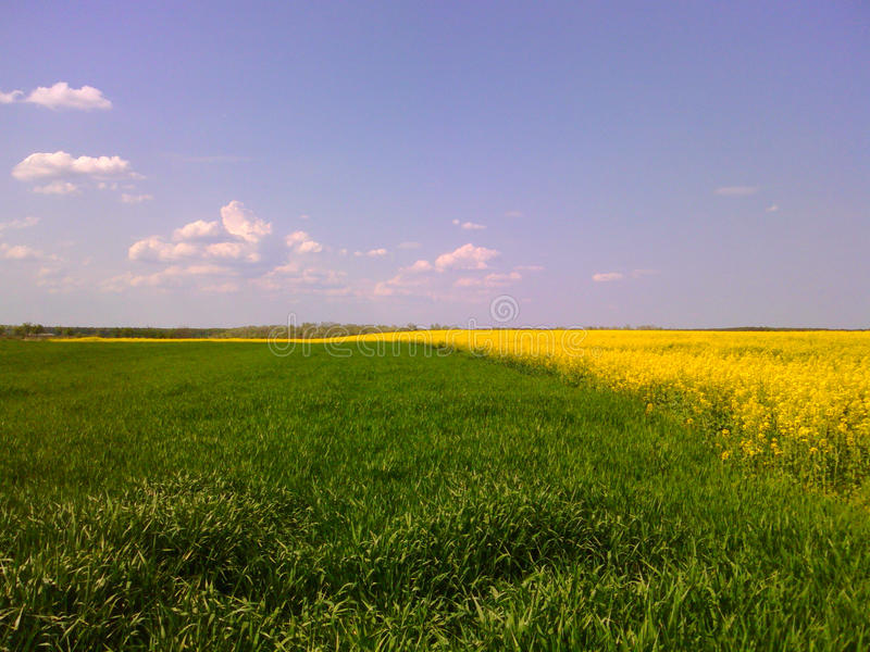 Green and yellow landscape royalty free stock images