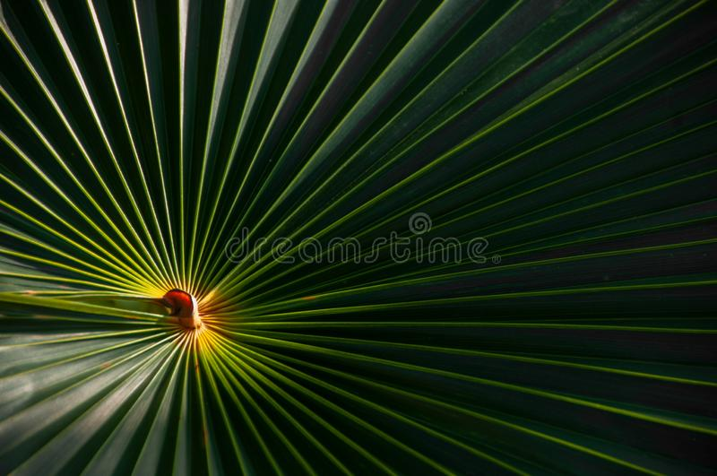 A palmetto palm frond with a bright center. Green and yellow palmetto palm frond abstract circular pattern with bright light in the center stock photo