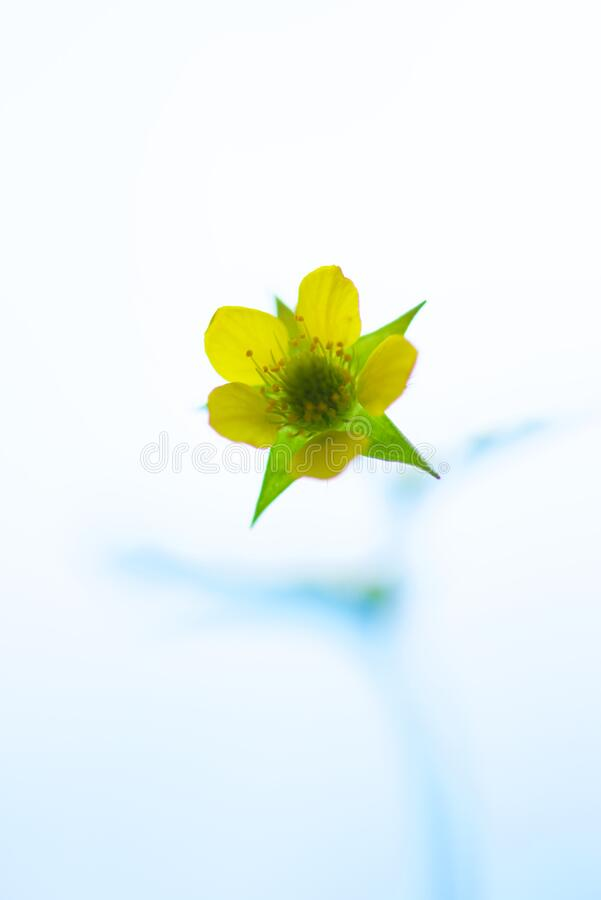 Green and Yellow Petaled Flower royalty free stock photo