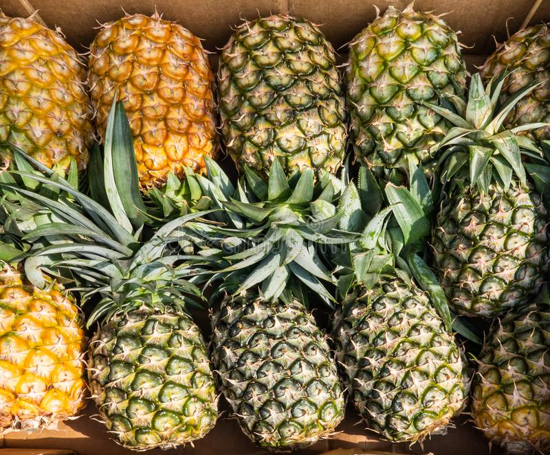 Green and Yellow Pineapples in a Box. Ananas comosus. Fresh Tropical Fruit royalty free stock photo