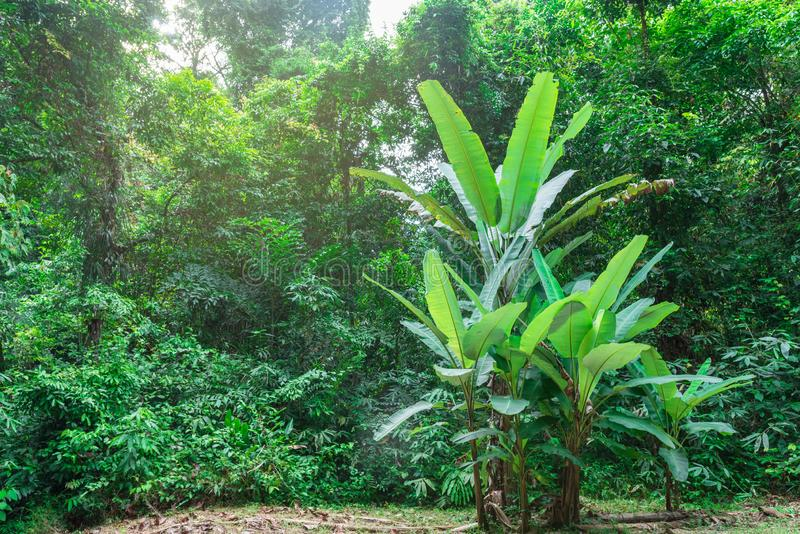 Green and yellow plants in the asian jungles in a hot day, Thailand stock image