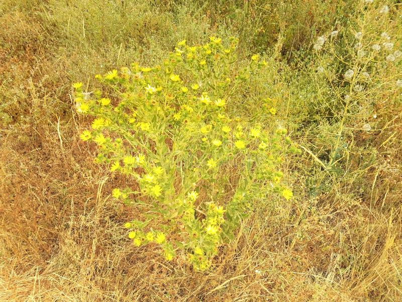 Green and yellow plants and flower and grasses. A variety of green and yellow plants and flower and grasses stock images