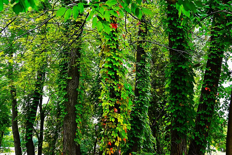 Green yellow and red ivy leaves climbing on the trunks of trees. Painted in oil royalty free illustration