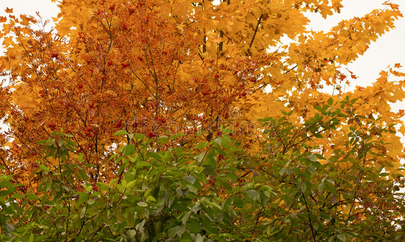 Green, yellow and red leaves stock image