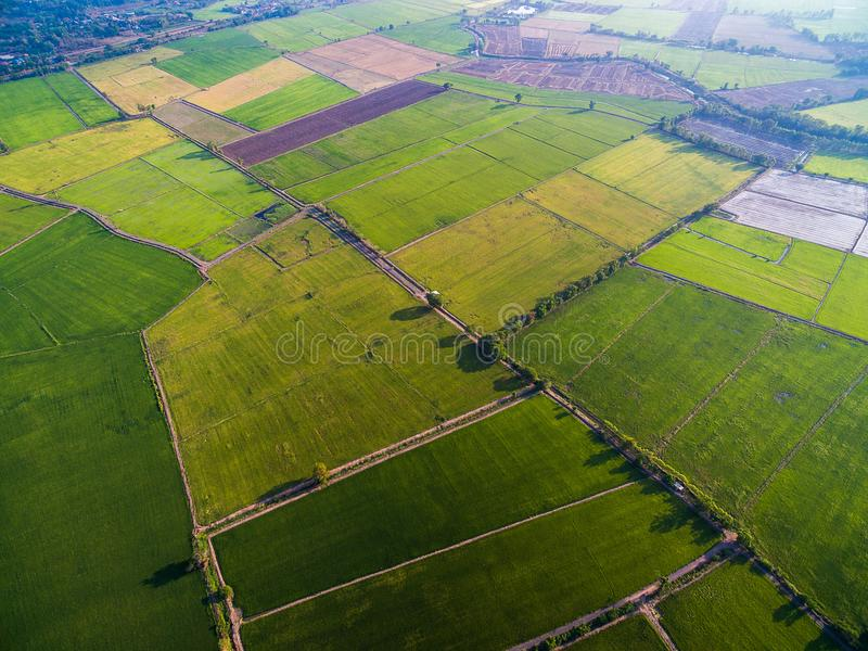 Green and yellow rice farms from above in morning light stock image