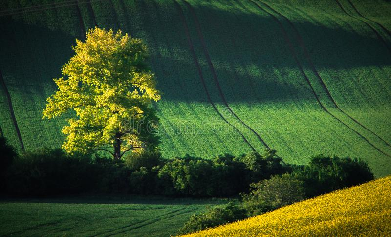 Green and yellow spring field abstract background royalty free stock images