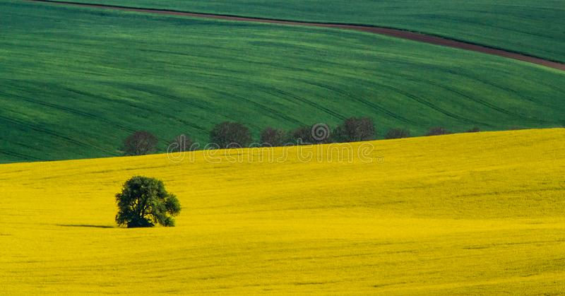 Green and yellow spring field abstract background stock photos