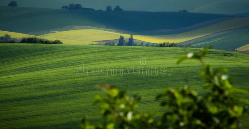Green and yellow spring field abstract background royalty free stock photography