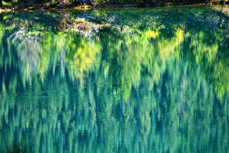 Green Yellow Trees Fall Reflection Gold Lake royalty free stock photos