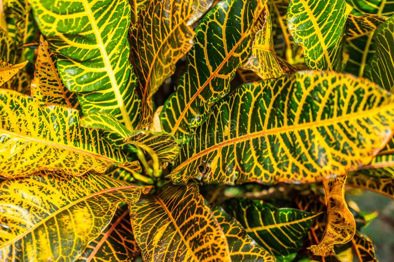 Green and yellow tropic plant leaves stock images