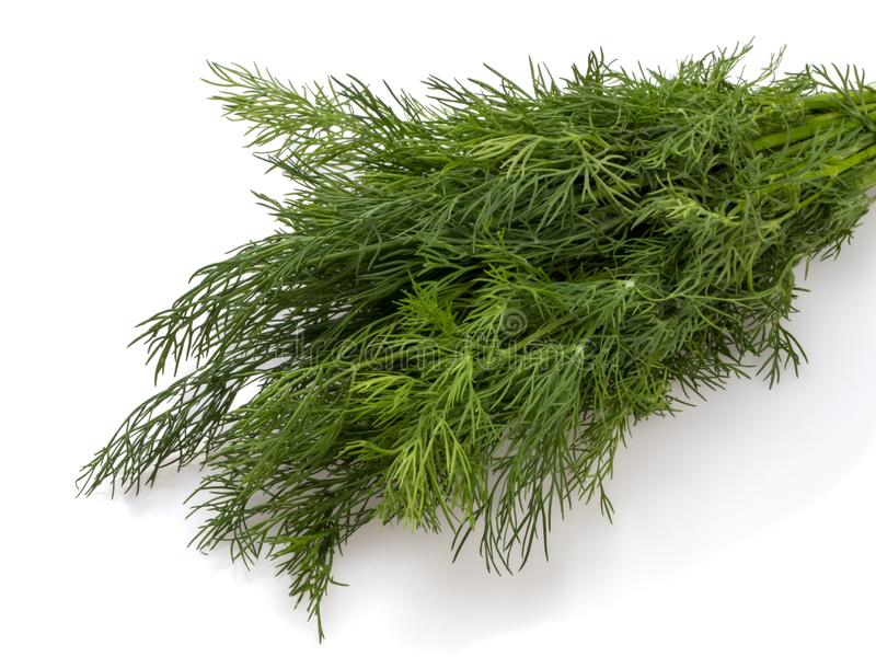 Green young dill. A bunch of close-ups. Spice, seasoning, ingredient. On a white background stock images