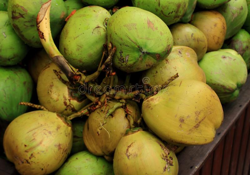 Green young fresh coconuts background. stock photography