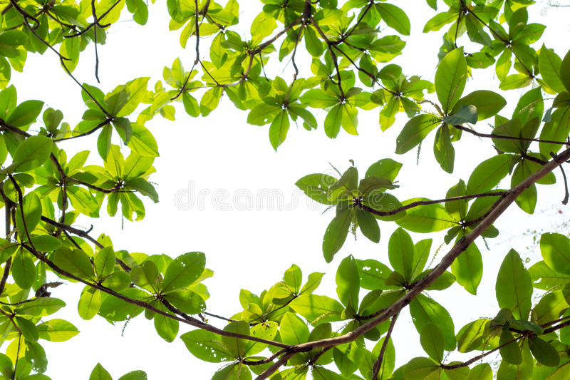 Green young leaves border on white background with copy space royalty free stock image