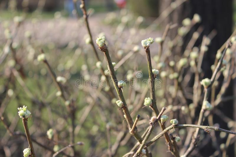 Green young leaves, tree Bud, bright background on a Sunny day. In spring stock image
