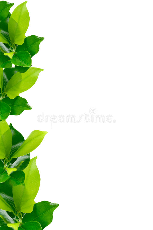 Green young plant border royalty free stock photos