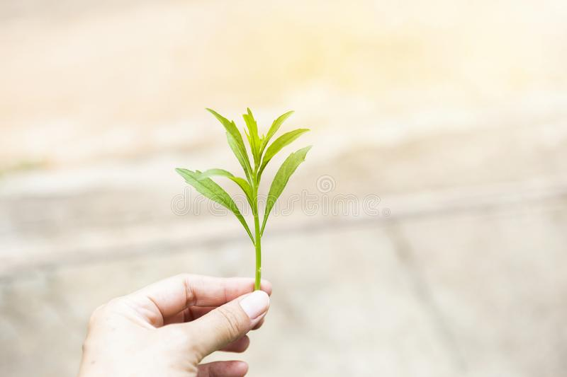 Green young plant in girl hand over blurred background stock photo