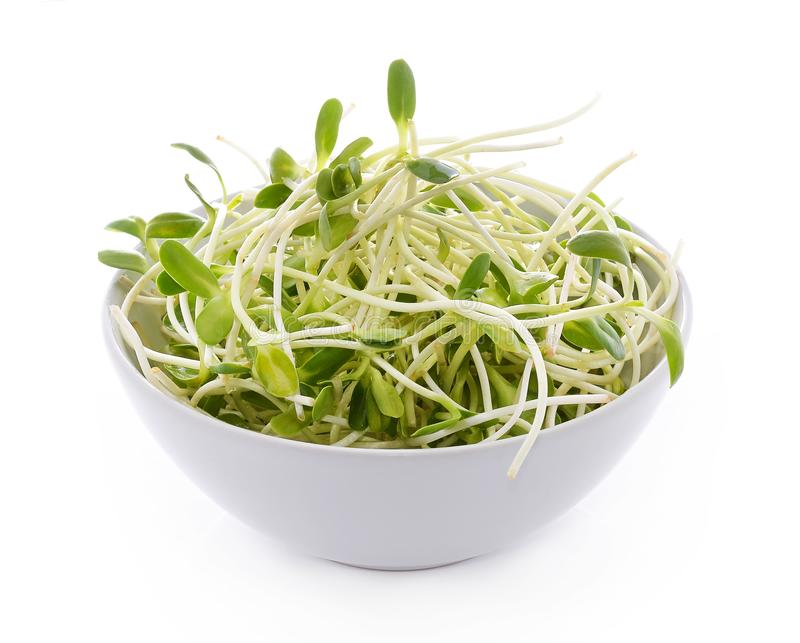 green young sunflower sprouts in the bowl isolated on white back royalty free stock images