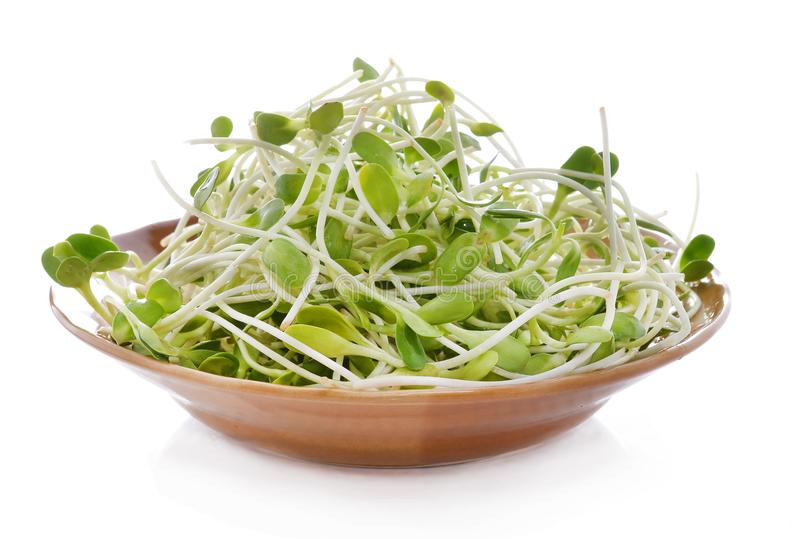 green young sunflower sprouts in the bowl isolated on white back stock photography