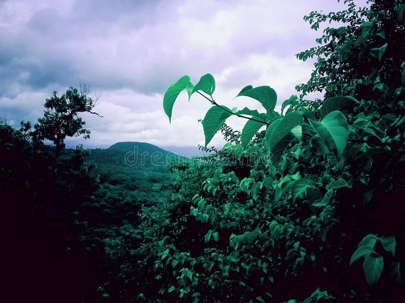 Greenary стоковые фотографии rf