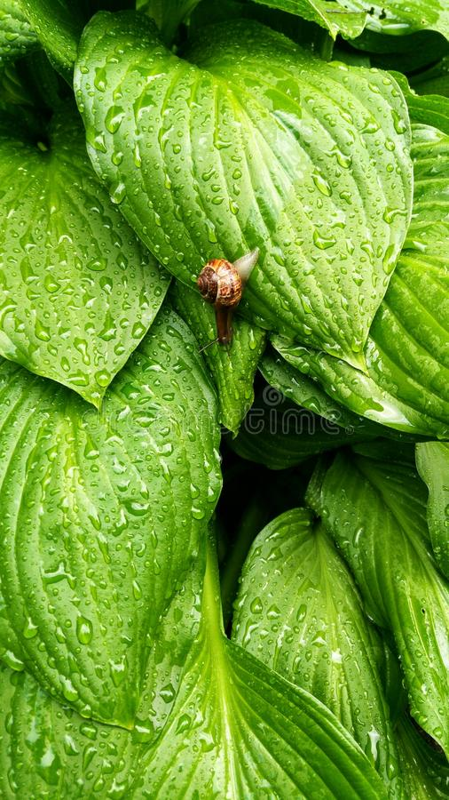Greenary stock images