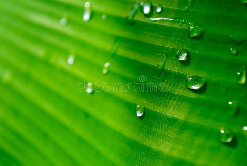 GreenBana immagine stock libera da diritti